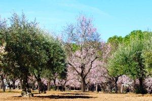 Quinta de los Molinos 11